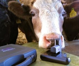 The ioLight portable microscope in the cattle shed at Red Oak Farm